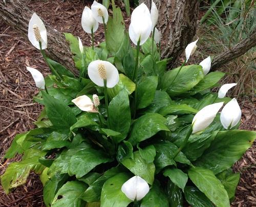 Allergy Fighting Plants For Your Outdoor Garden