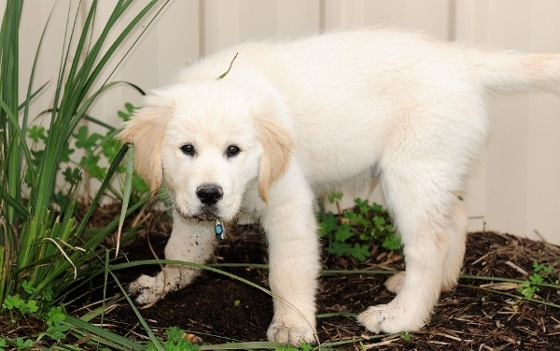 Keeping Dogs From Digging Under Your Fence