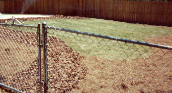 Insects That Damage Your Fence And What To Do About Them